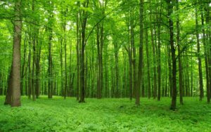 13 мая УКТУС отмечает Всероссийский день посадки леса!